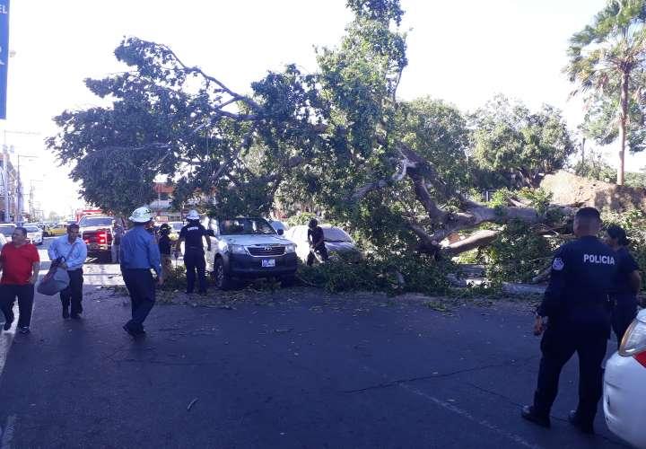 Fuerte brisa ocasiona caída de árbol sobre autos en el Parque Cervantes