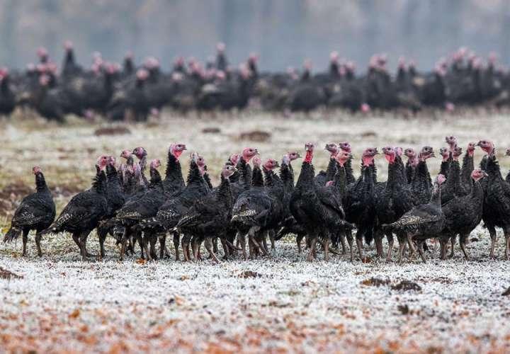 Rusia confirma el primer caso de la gripe aviar H5N8 en un ser humano