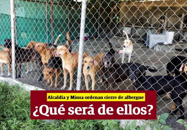 Alcaldía y Minsa ordenan cierre de albergue de perros en 15 días