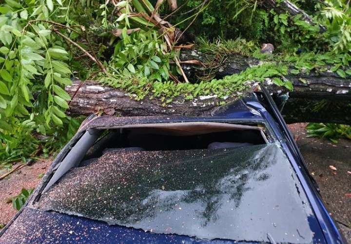 ¡ Se salvaron!  Árbol cae sobre vehículo en Colón