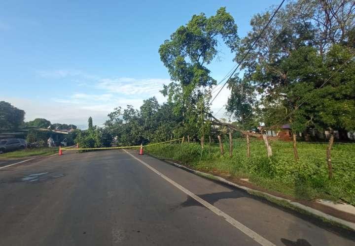 Árboles caen sobre la vía  en Monagrillo y derriban tendido eléctrico
