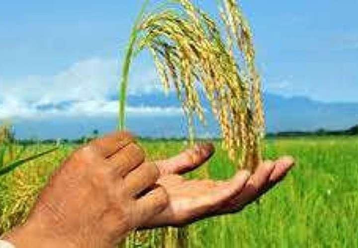 Industriales comprarán producción nacional de arroz