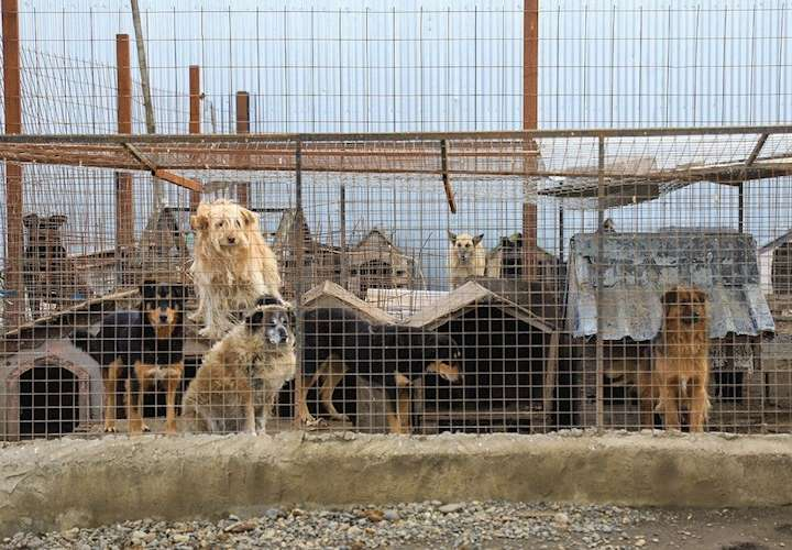 La ciudad argentina que se organizó para ayudar a sus protectoras de animales