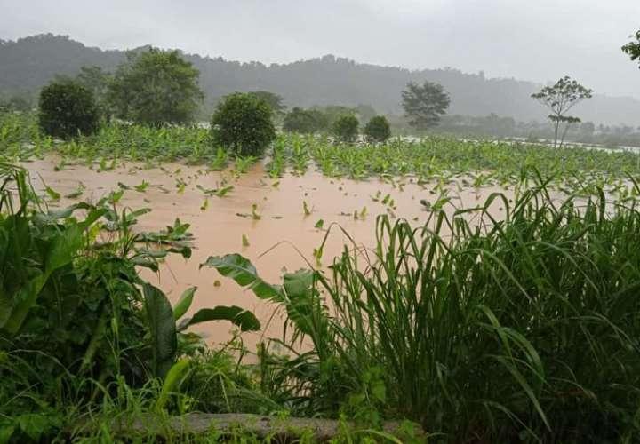700 productores de Bocas del Toro afectados por mal tiempo