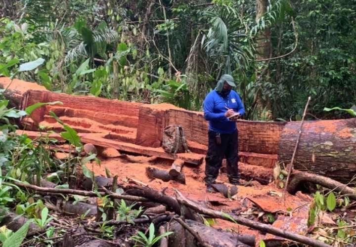 Deforestación en Quebrada Pato, cerca del Lago Gatún
