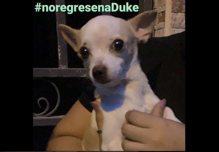 Duke, chihuahua maltratado, permanecerá bajo custodia de Fundación Manchitas