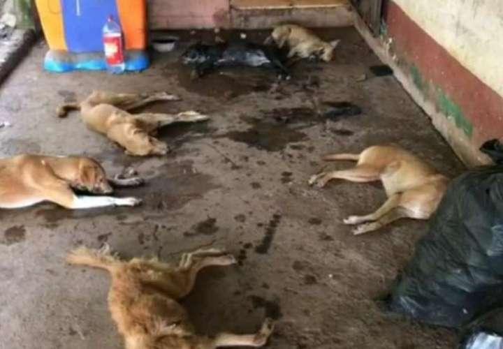 Inician investigación por perros envenenados en Arraiján