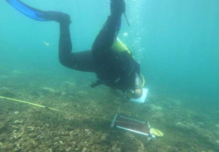 Durante las inmersiones se observó una cantidad considerable de  coral fracturado, lo que supone la presencia de malas prácticas de uso del recurso.