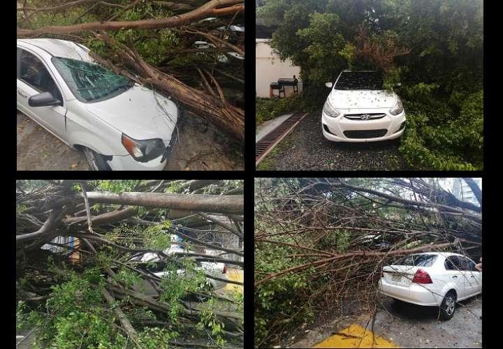 Árbol se desploma y aplasta dos vehículos en El Cangrejo