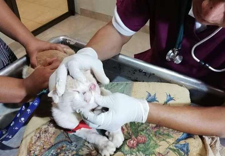 Chiquilla golpea brutalmente a un gato