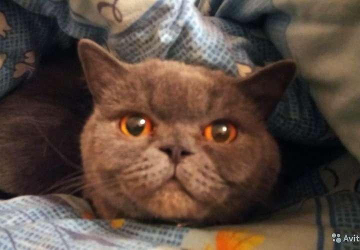 Vende una gata que cura la resaca y evita la infidelidad entre parejas