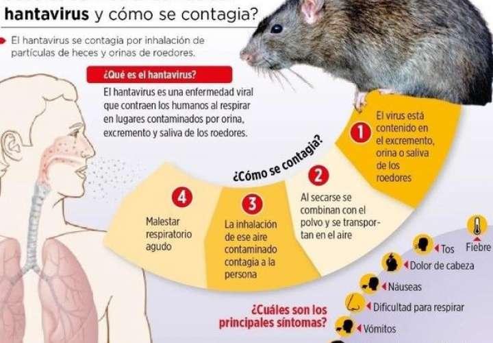 Minsa reporta tres casos de hantavirus en Los Santos, Herrera y Chepo