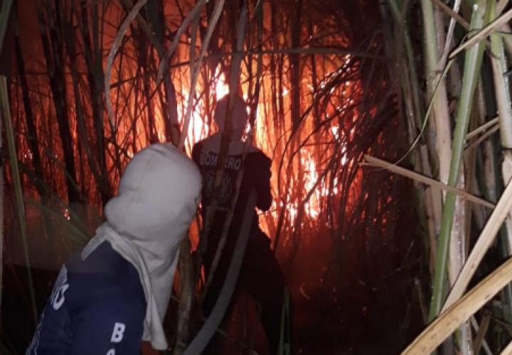 Más 1,000 incendios de masa vegetal a nivel nacional