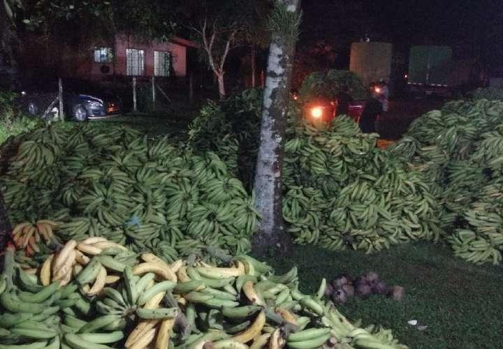Compran plátano, banano y pixbae a productores bocatoreños