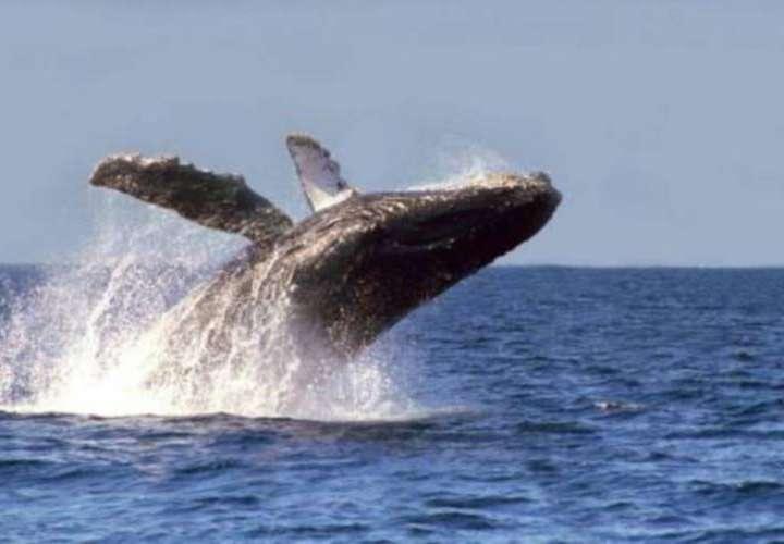 Capacitan a pescadores en avistamientos de ballenas