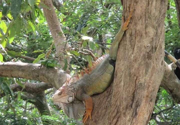 Reubican de animales silvestres del parque Miguel de Cervantes en David