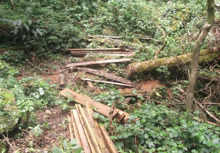 Denuncian delitos ecológicos en el Parque Internacional La Amistad
