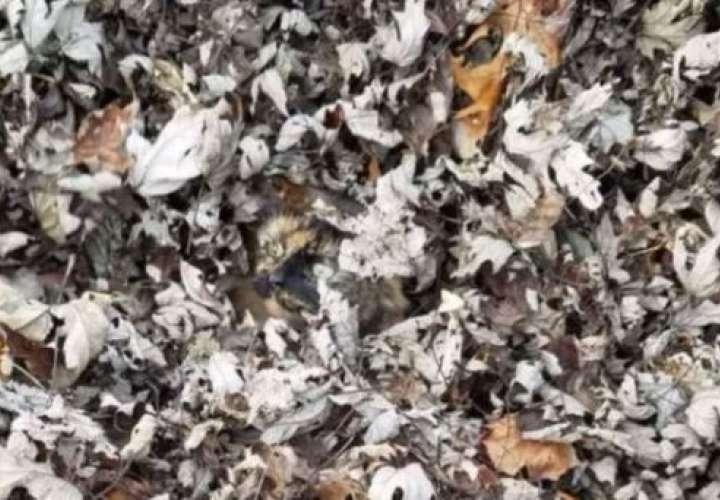 ¿Puedes encontrar al gato? Este es el nuevo reto viral en las redes