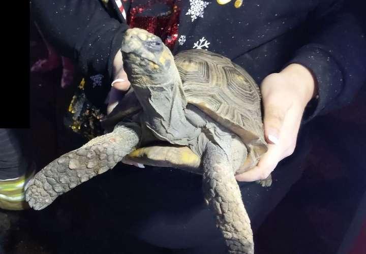 Una tortuga causa un incendio y muestra su enojo al ser rescatada