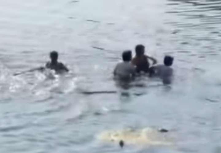 Cocodrilo ataca adulta mayor mientras lavaba ropa en un río (Video)