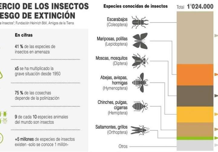 Un tercio de los insectos está en riesgo de extinción, según un estudio