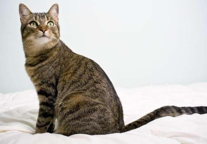 Consternación en Betania por maltrato animal contra un gatito