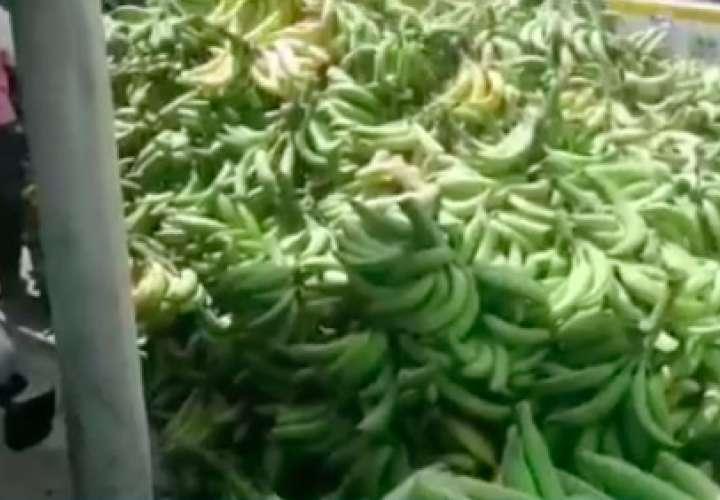 Vendedores de plátanos de Bocas del Toro reportan pérdidas