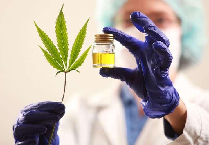Suspenden debate de cannabis medicinal