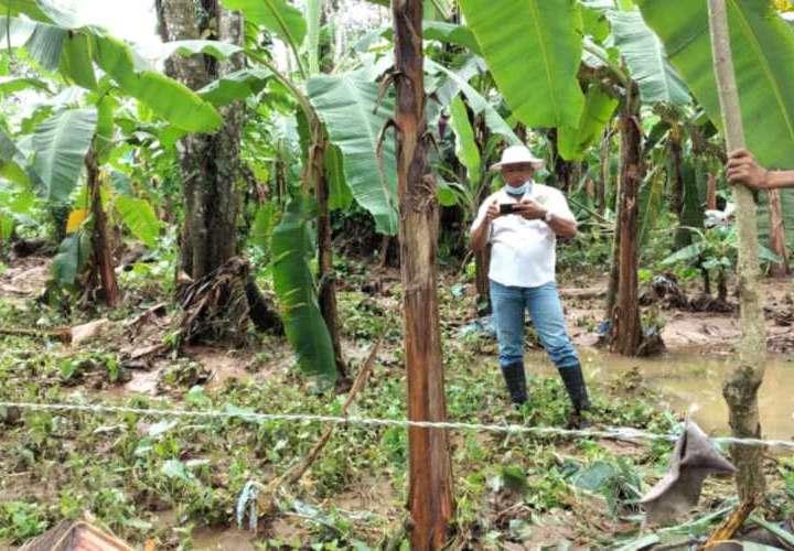Daños cuantiosos a producción agropecuaria por inundaciones