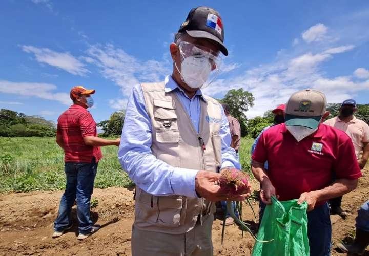 IMA compra cebollas y plátanos a productores  afectados por las lluvias