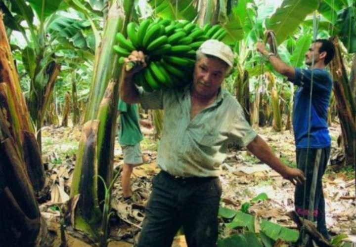 Cinco fincas bananeras se van a huelga