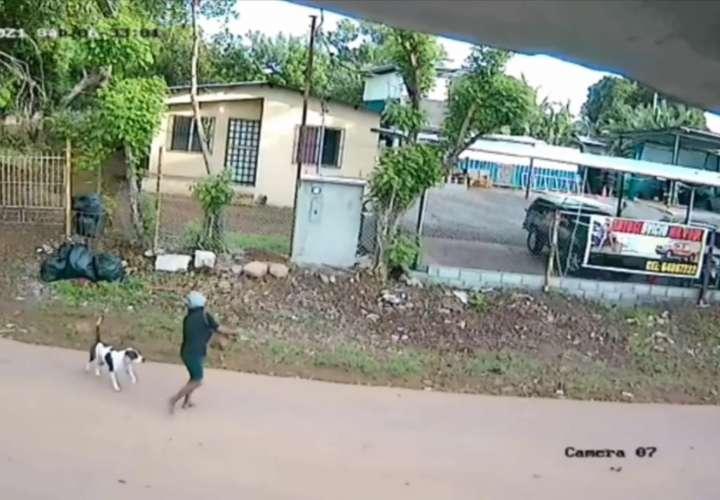Dan de alta a mujer que fue atacada por perro en Chiriquí