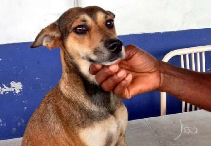 Retienen a maltratador de perro en Tocumen  [Video]