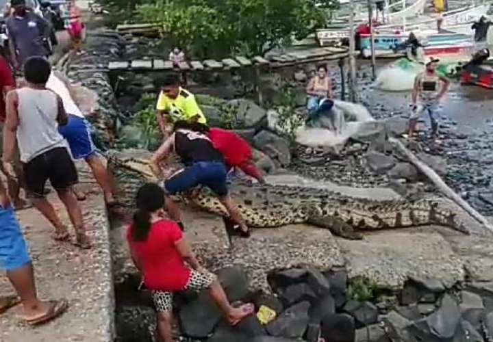 Mi Ambiente investiga caso de tortura a cocodrilo