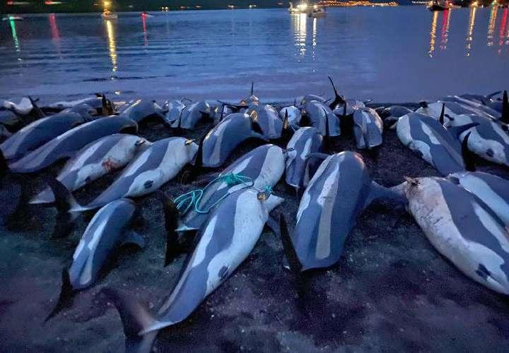 Las Islas Feroe evaluarán la caza de delfines tras críticas