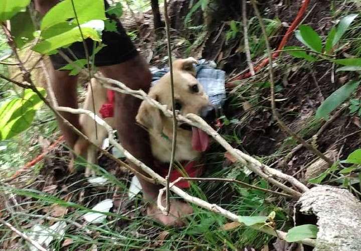 Rescatan a perro en Chiriquí