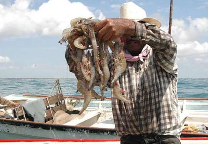 Finaliza la veda del camarón