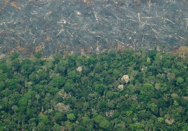 La Amazonía perderá unas 860.000 hectáreas en 2021