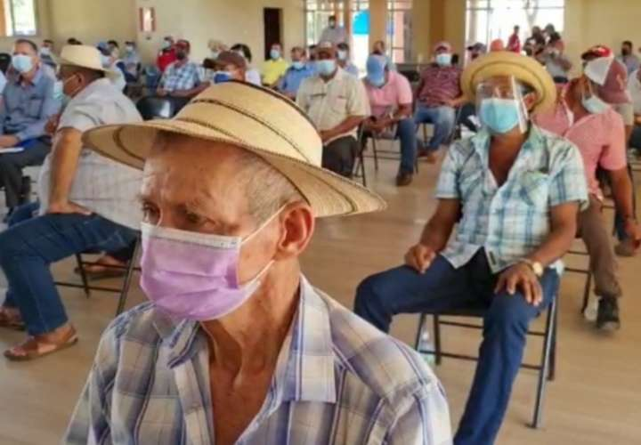 Platita va bajando para los productores herreranos