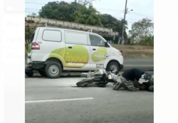 Lince en estado grave tras sufrir colisión en Arraiján; otro está herido (Video)