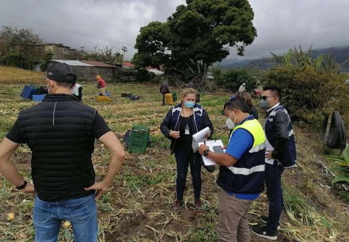 Los operativos se realizaron en zonas de producción agrícola del distrito de Tierras Altas, provincia de Chiriquí