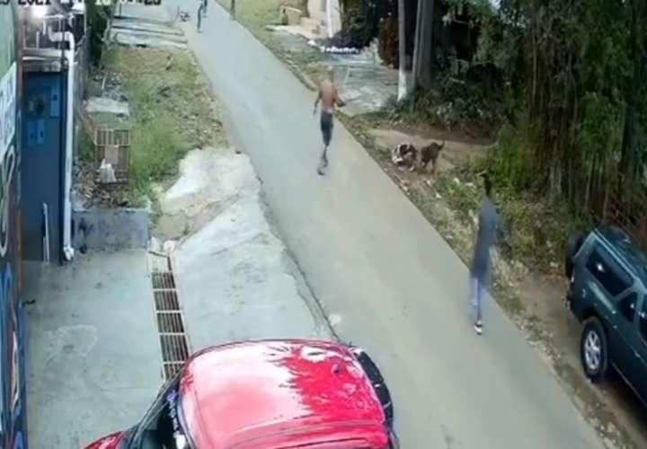 Perra que mordió a mujer es captada en otro video que muestra su agresividad