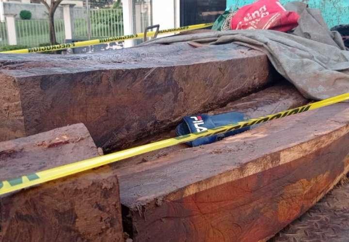 Tras las rejas tres sujetos por tráfico de madera  [Video]