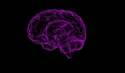 Cerebro humano. Imagen ilustratrativa Pixabay
