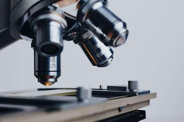 Los autores del estudio consideran que estos resultados son un buen punto de partida para la investigación con modelos animales. EFE