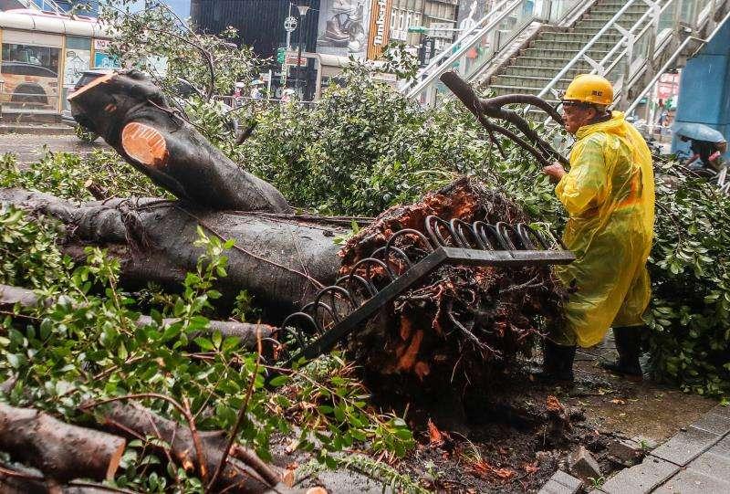 Un trabajador retira partes de un árbol caído después del paso de un tifón. EFE/Archivo