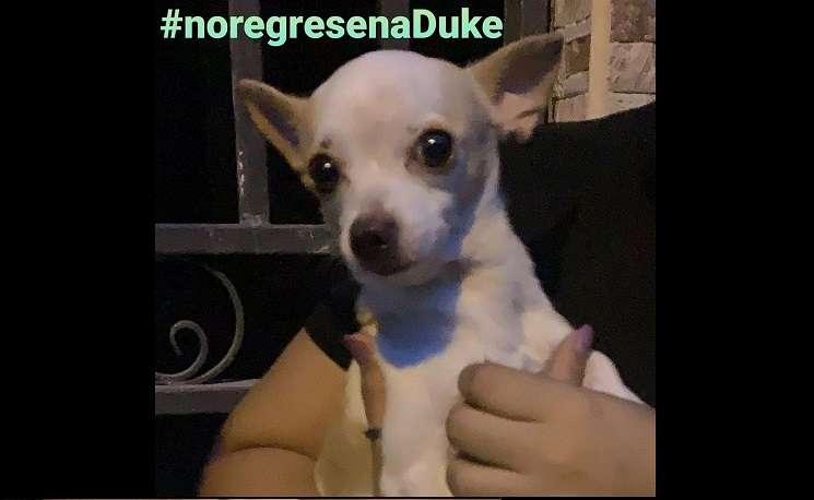 La cuneta de Instagran @mascotassinfronteras ha iniciado una campaña para que el can no sea regresado a la casa de su dueño.