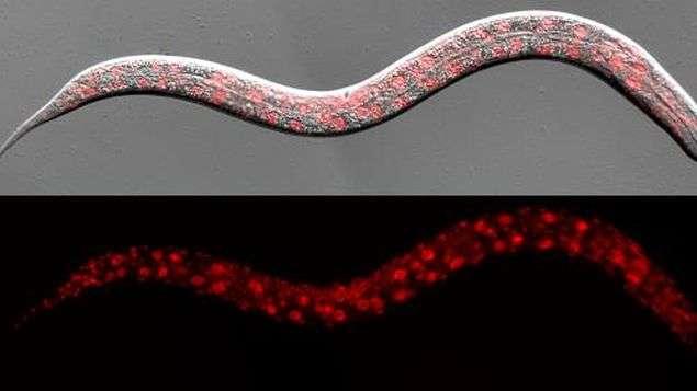 Imagen: Instituto español de Investigaciones Biomédicas de Bellvitge