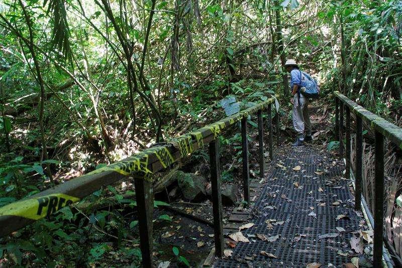 Guía turística explica la importancia de la conservación en un sendero en Barro Colorado, una isla localizada en el lago Gatún del Canal de Panamá (Panamá). EFE