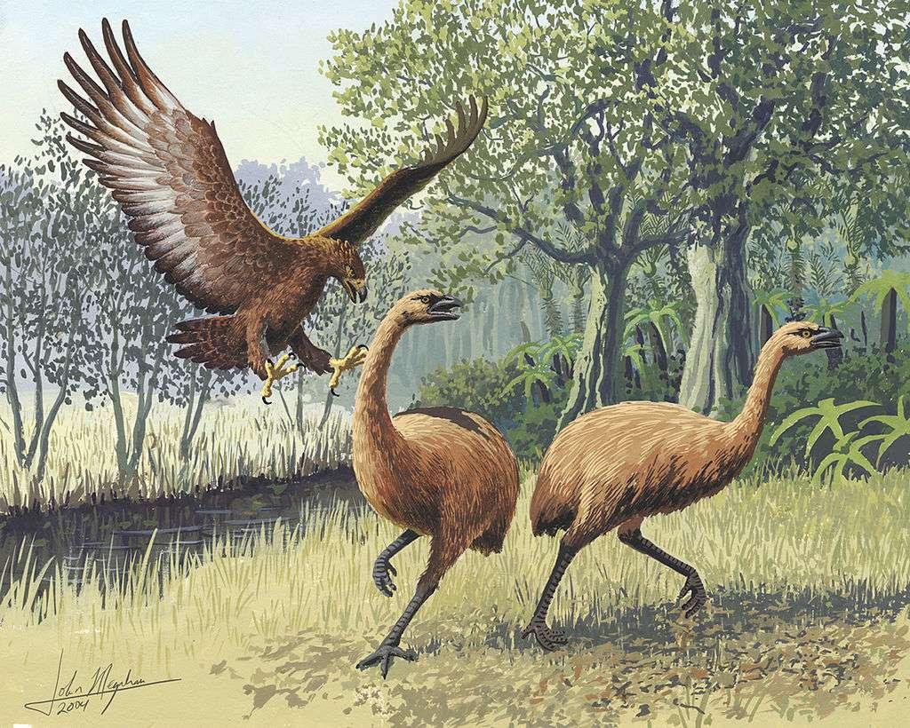 Un águila de Haast ataca dos moas (representación artística). Wikimedia / John Megahan